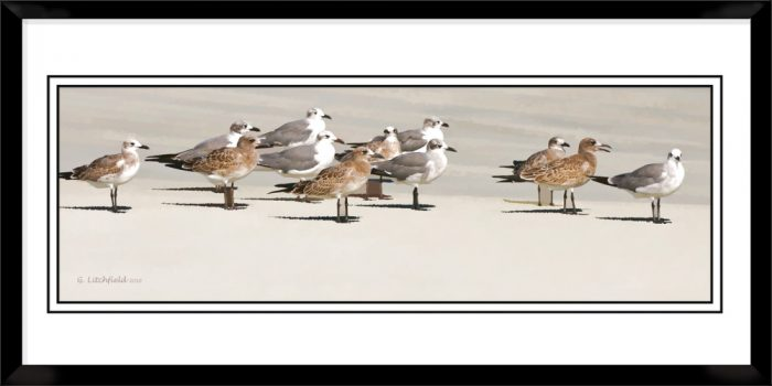 1x3-picture-frame-black-with-Crowd-Of-Gulls