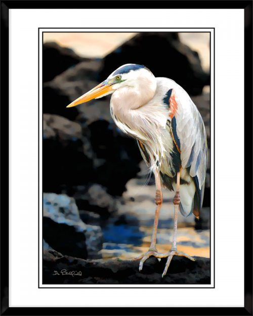 2x3-picture-frame-black-with-Blue-Heron-On-The-Rocks