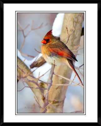 2x3-picture-frame-black-with-Colorful-Cardinal