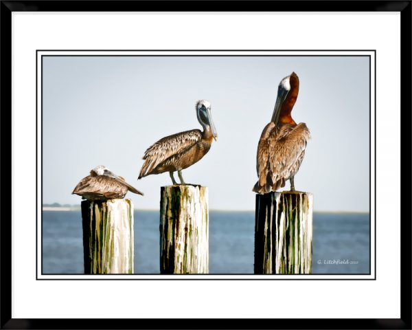 2x3-picture-frame-black-with-Pelican-Roost