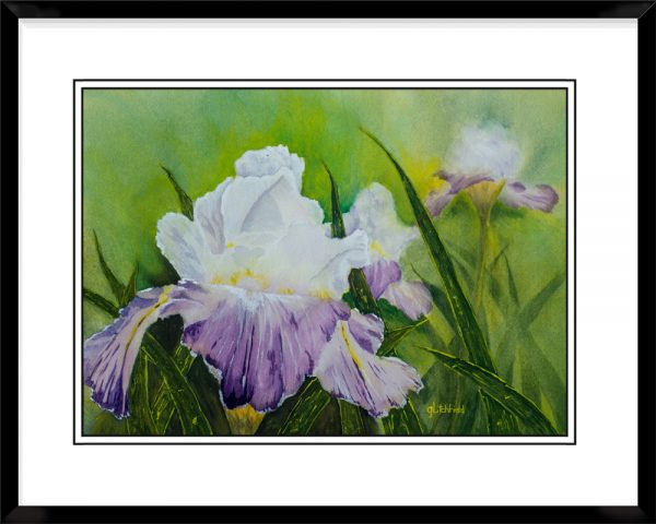 1x2-Landscape-Frame-with-Iris-Blooms