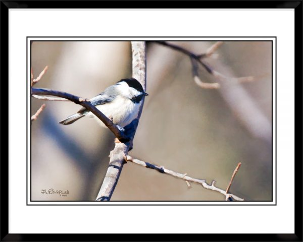 2x3-picture-frame-black-with-A-Black-Capped-Chickadee