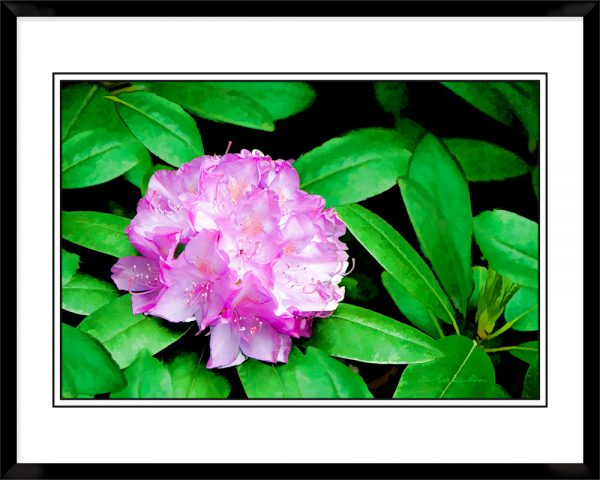 2x3-picture-frame-black-with-Azalea