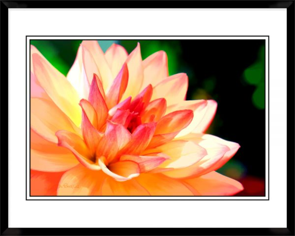 2x3-picture-frame-black-with-Dahla-In-Orange